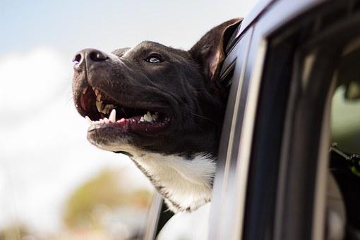 Articulo - Mejor Regalo Perro