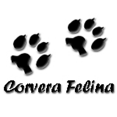 Corvera Felina - Mirada Malaika